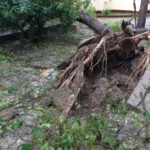 One tree even uprooted concrete
